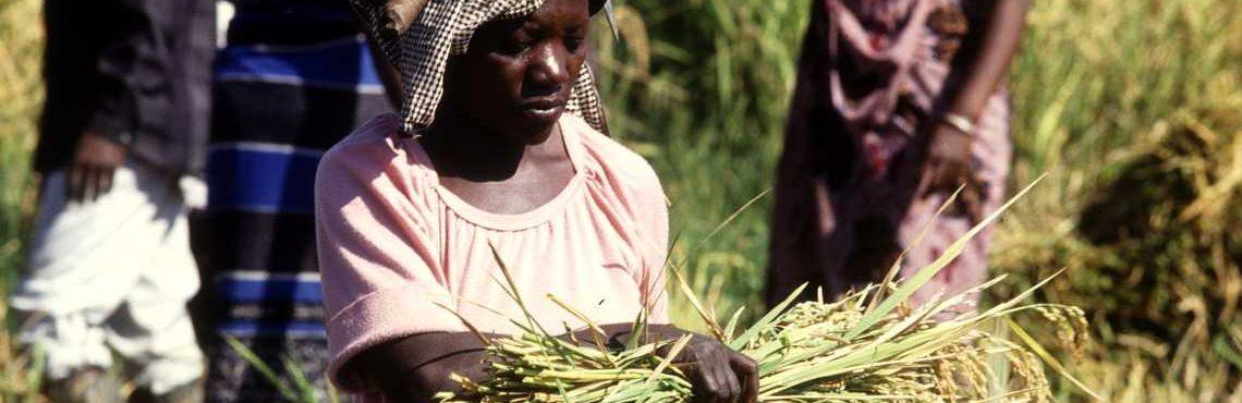 Le Covid-19 fait planer le risque d'une crise alimentaire mondiale