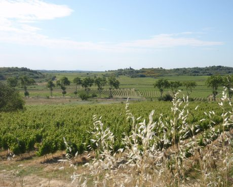 Ecophyto viticulture Photo : Chambre agriculture Languedoc Roussillon