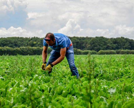# Agriculture biologique